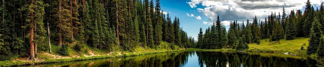 pefc forest