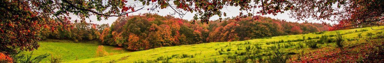 garden and outdoor Autumn